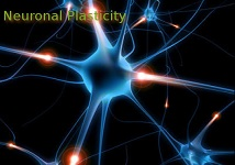 Neural Plasticity Bellevue, Neural Plasticity Bellevue WA, Neural Plasticity Redmond WA, Neural Plasticity Eastside WA, Neural Plasticity Factoria WA, Neural Plasticity Seattle WA